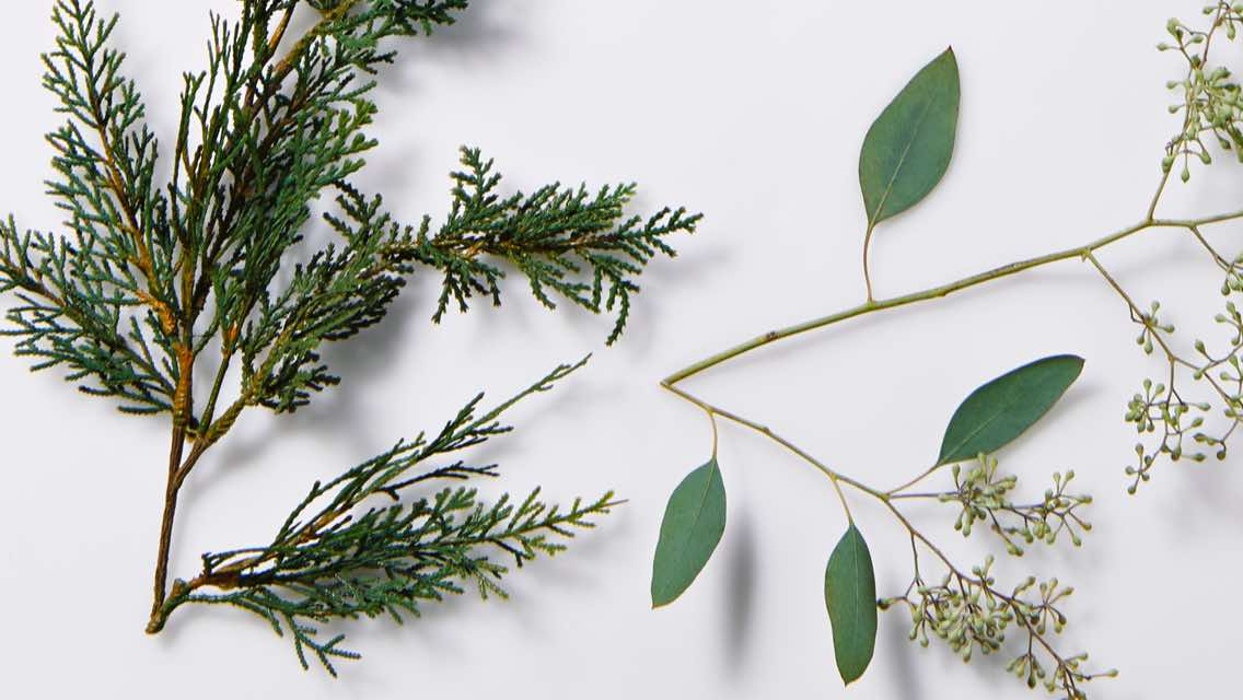 Sprigs of a pine tree and green leaves on a white background