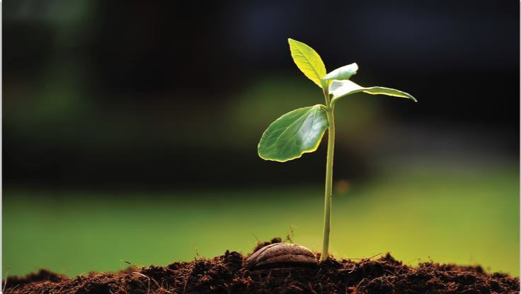 A single sprout of a plant with four small leaves grows out of soil