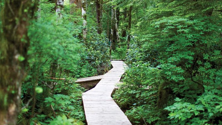 A wooden path surrounded by a forest of leafy, green trees