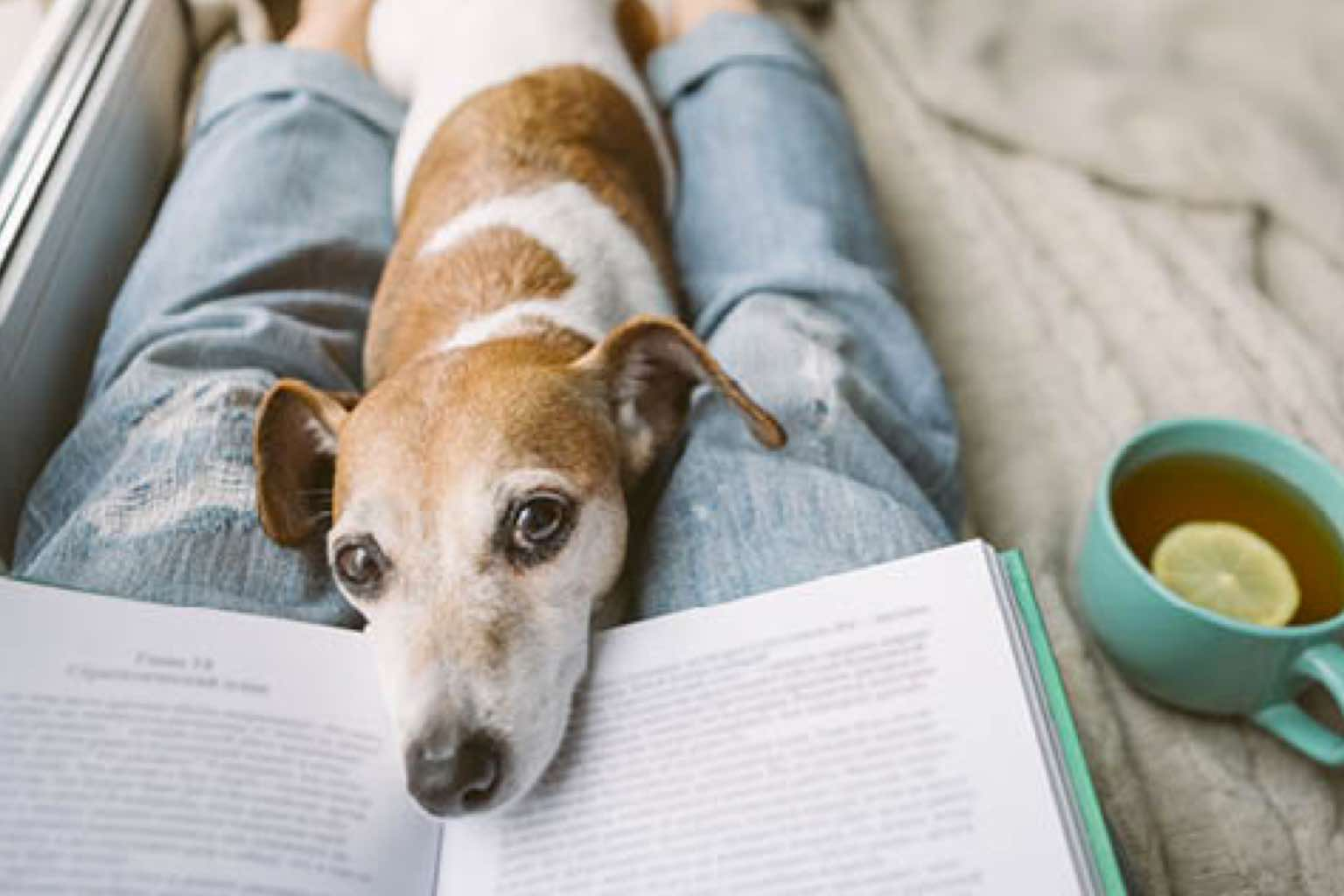 Dog laying in a person's lap next to an open book