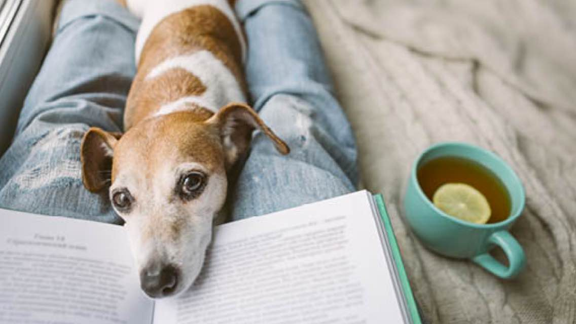 Aerial view of a dog and a book laying on a person's lap